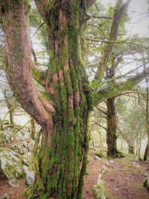 Eibenland - Das Vermächtnis des Weltenbaums