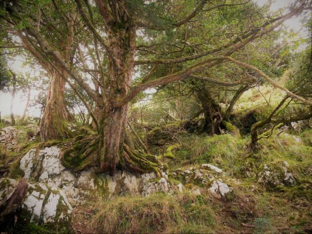 El Sueve - Eine Wanderung zum Pico Pienzu