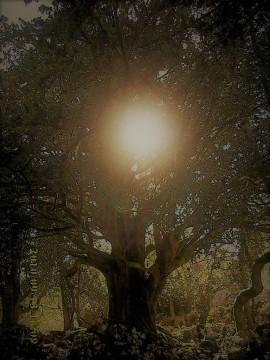 Der Gesang der Nachtigall auf dem Sternenweg und das Nachtigallenwäldchen